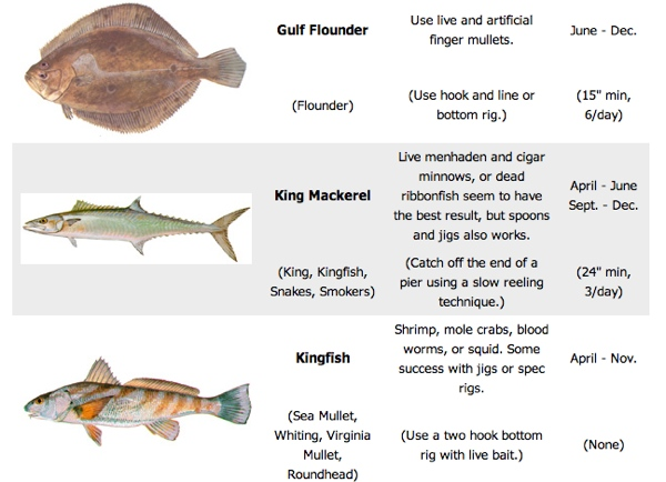 outer-banks-fishing-limits-guide-types
