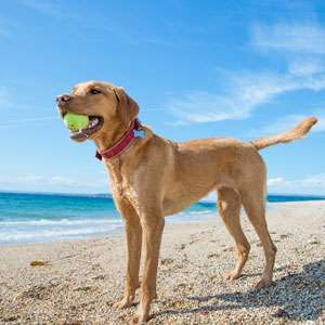 Corolla Pet Friendly Vacation Rentals