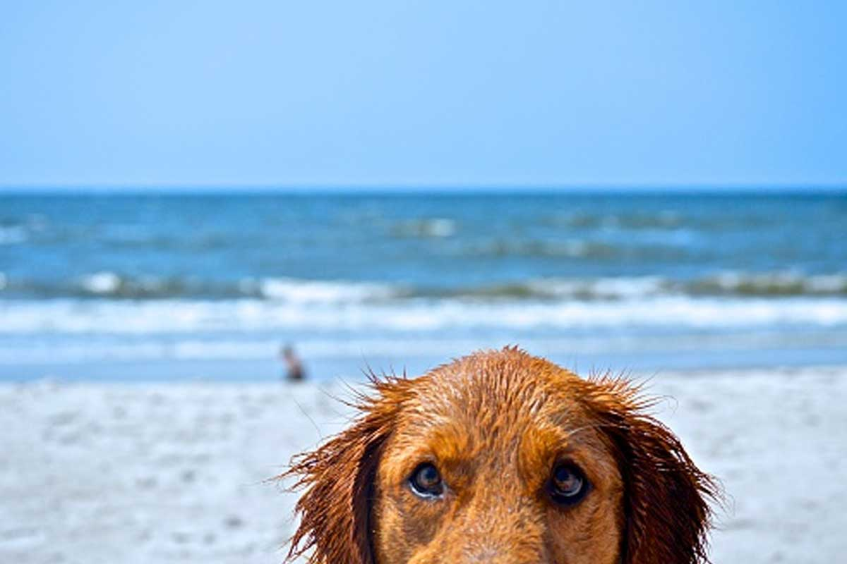 outer banks pet friendly rentals | outer banks vacation guide